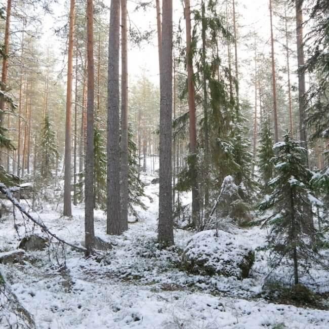 shavasana-metsamaisema-lunta-ja-aurinkoa